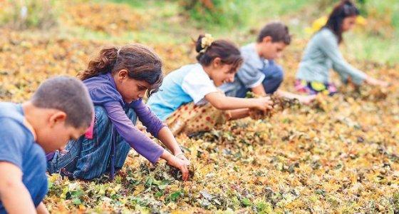 152 milyon çocuk işçilik yapıyor