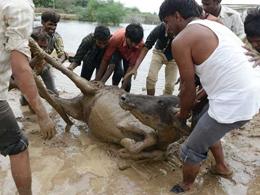 Hindistan'da muson bilan�osu: 180 �l�